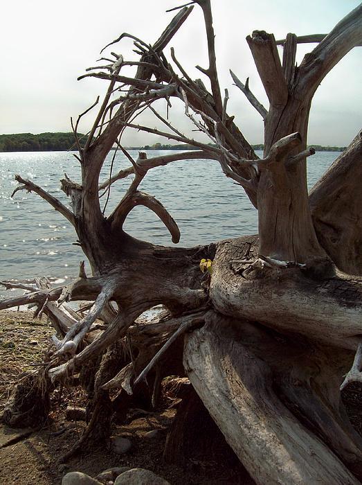 Melanie Hamm - Twisting Roots