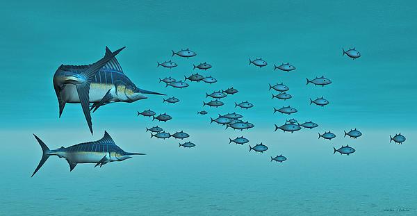 Walter Colvin - Two Blue Marlin