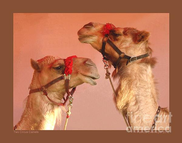 Two Circus Camels Print by Patricia Overmoyer
