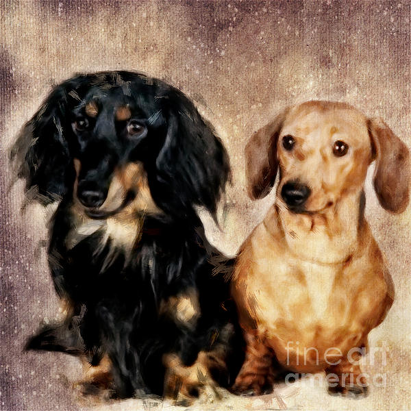 Angela Doelling AD DESIGN Photo and PhotoArt - Two dogs