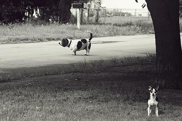Two Dogs Print by Toni Hopper