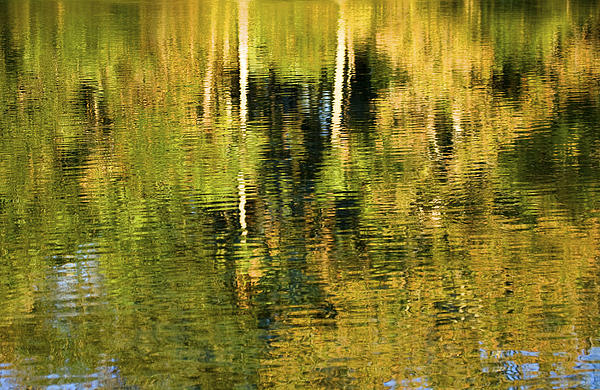 Two Palms Reflected In Water Print by Rich Franco