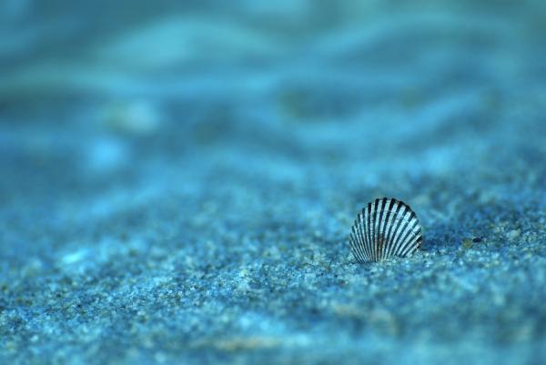 Underwater Seashell - Jersey Shore Print by Angie Tirado