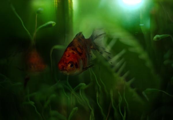 Underwater World Print by Angel  Tarantella