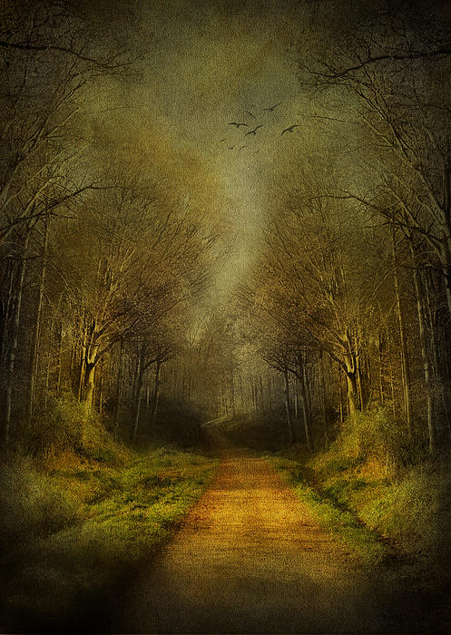 Unknown Footpath Print by Svetlana Sewell