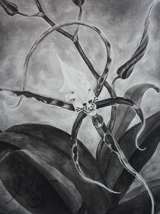 Upside-down Orchid Print by Estephy Sabin Figueroa