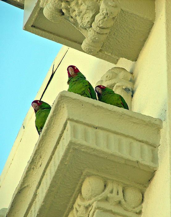 Jake Johnson - Urban Birds