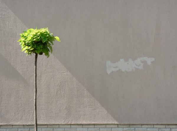Urban Tree Minimalism Photograph