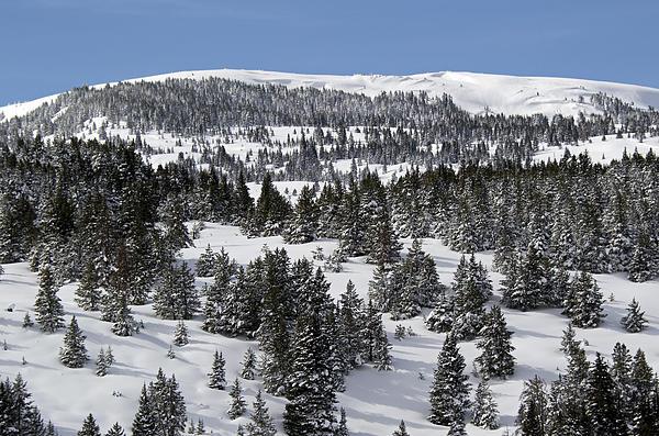 Vail Pass Colorado Winter Print by Brendan Reals