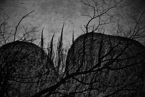 Valley Of Sticks Print by Jerry Cordeiro