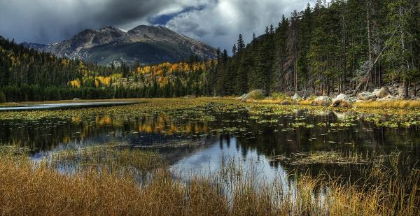 View From Cub Lake Photograph  - View From Cub Lake Fine Art Print