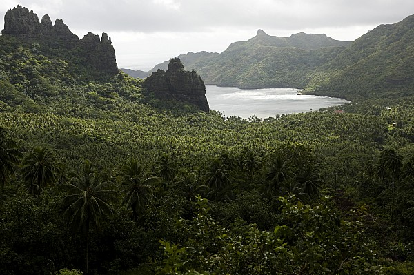 View Of Hatiheu Bay, Nuku Hiva Print by Tim Laman