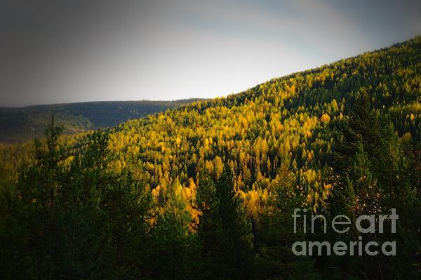 Vifnette Of Autumn Gold Print by Jeff  Swan