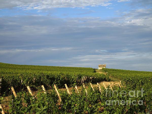 Vines In Burgundy. France Print by Bernard Jaubert
