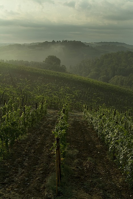 Vineyards Along The Chianti Hillside Print by Todd Gipstein