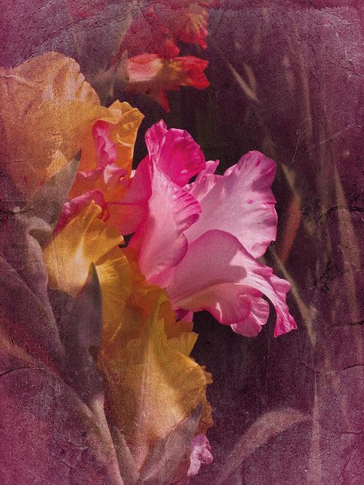 Vintage Gladiolas Print by Richard Cummings