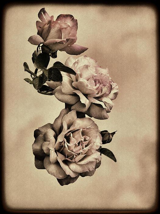 Diane Schuster - Vintage Roses