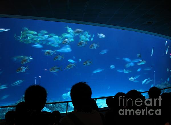 Visitors At Ocean Aquarium Print by Yali Shi