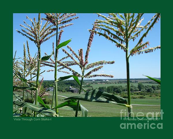 Vista Through Corn Stalks-i Print by Patricia Overmoyer