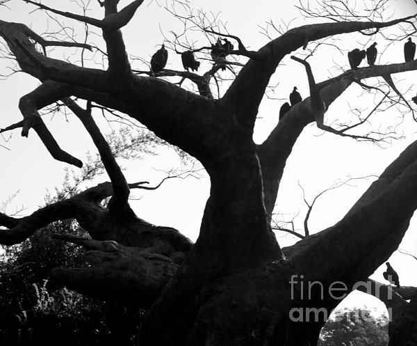 Dyana Rzentkowski - Vulture Tree