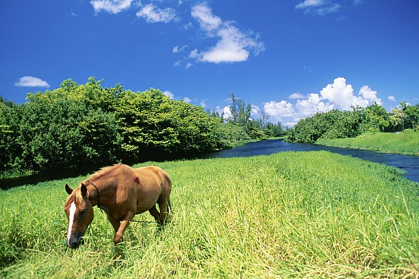 Wainiha Valley Print by Peter French - Printscapes