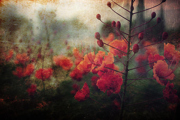 Waiting For Better Days Print by Laurie Search