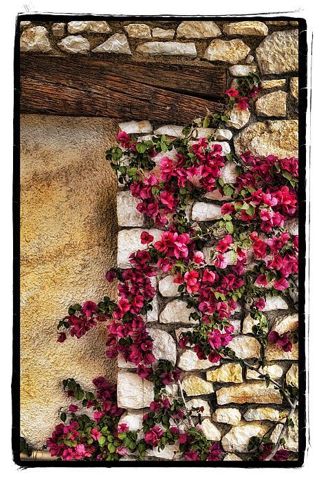 Wall Beauty Print by Mauro Celotti