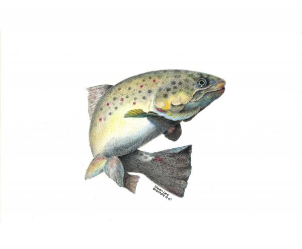 Wallace Brantley Fishing Series Mr. T Print by Sharon Blanchard