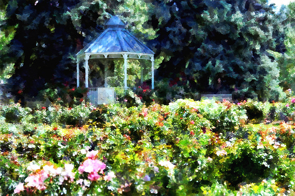 War Memorial Rose Garden 1  Print by Angelina Vick