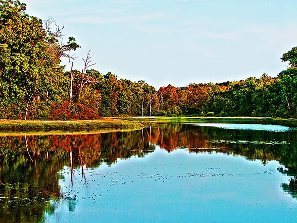 Lamyl Hammoudi - Water and forest