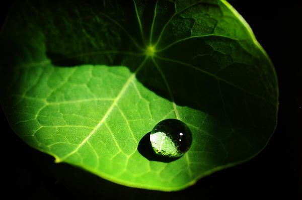 Melanie Lawson - Water Drop