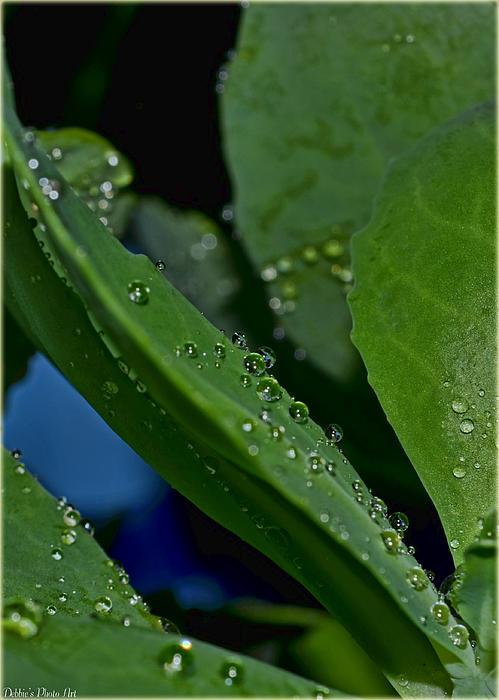 Debbie Portwood - Water Drops Macro