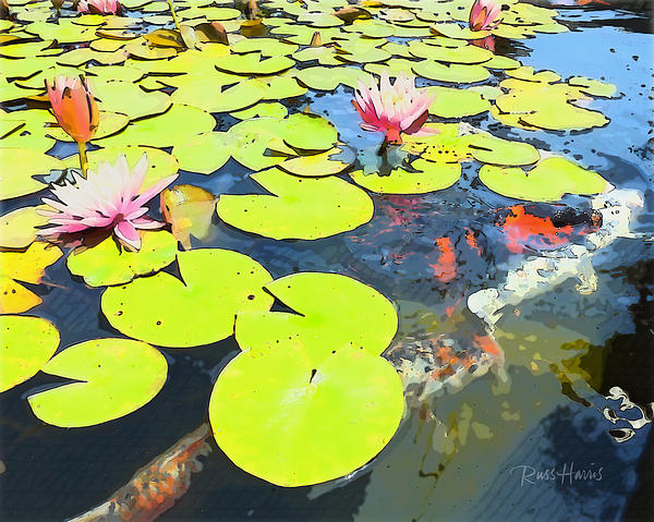Water Lilies And Koi Print by Russ Harris