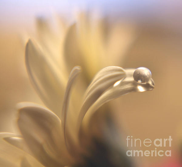 Waterbead Print by Wendy Riley- Athans