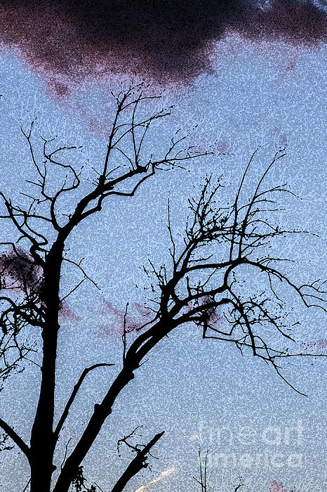 Darleen Stry - Watercolor Tree Silhouette
