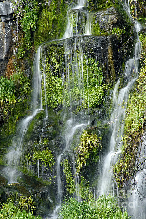 Waterfall At Columbia River Washington Print by Ted J Clutter and Photo Researchers