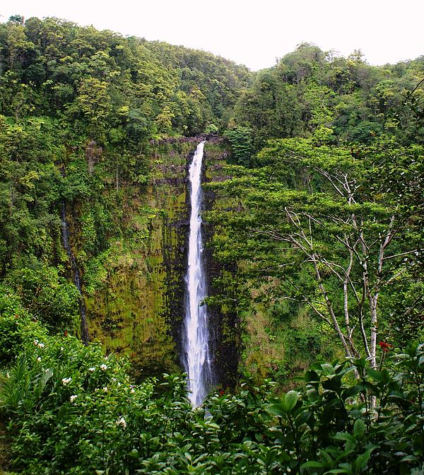 waterfall Hawai Print by Luis and Paula Lopez