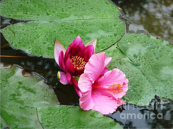 Waterlily And Hibiscus Print by Robert Hooper