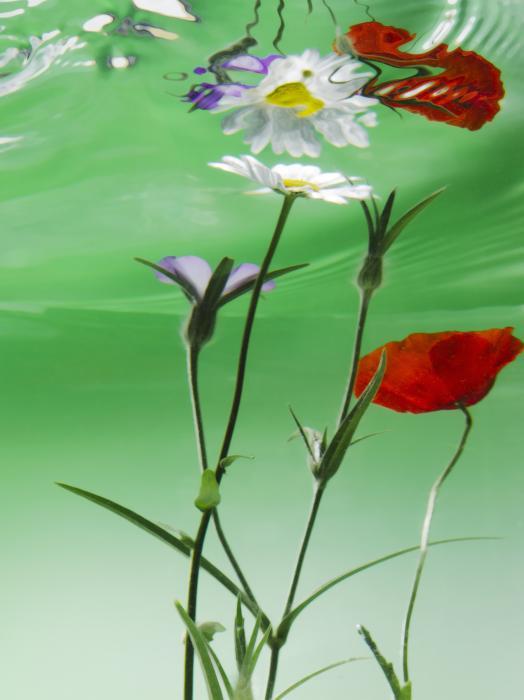 Wet Wild Flower Print by Han Van Vonno