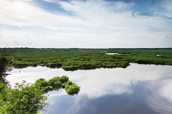 Wetland And Water Reflection Of Sky Print by Ellie Teramoto