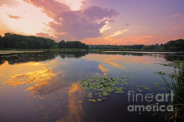 Charline Xia - Wetland at Sunset