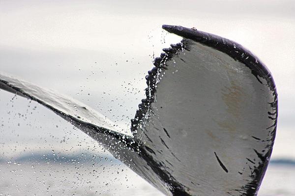 Kristin Elmquist - Whale Tail Close Up