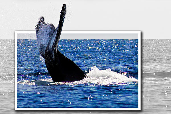 Whale Tail Print by Jean Noren