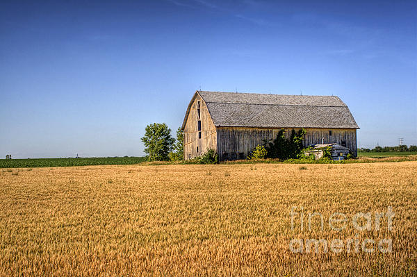 Wheat Field Barn Photograph