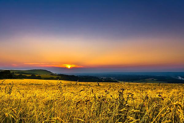 Wheat Field Print by Rob Webb