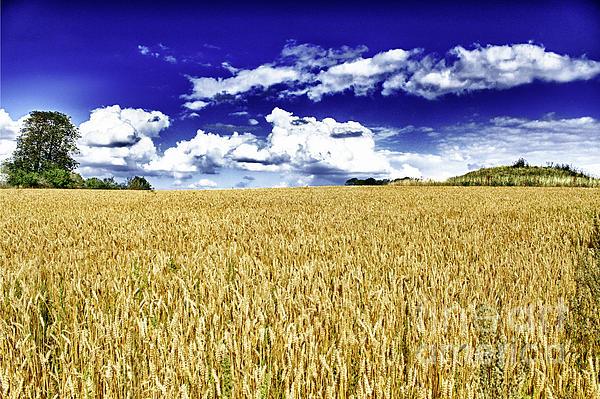 Miso Jovicic - Wheat