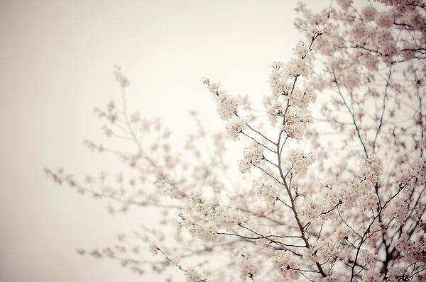 Vivienne Gucwa - Whisper - Spring Blossoms - Central Park