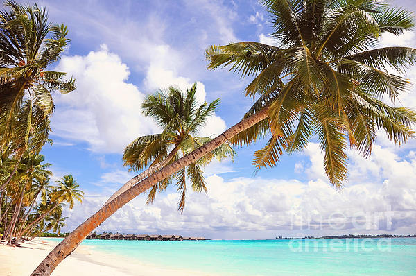 Whispering Palms. Maldives Print by Jenny Rainbow