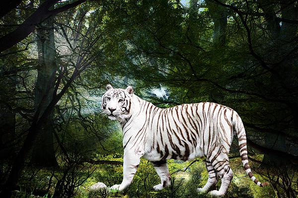 White Bengal Print by Elizabeth Hart