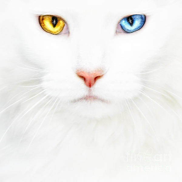 Datha Thompson - White Cat
